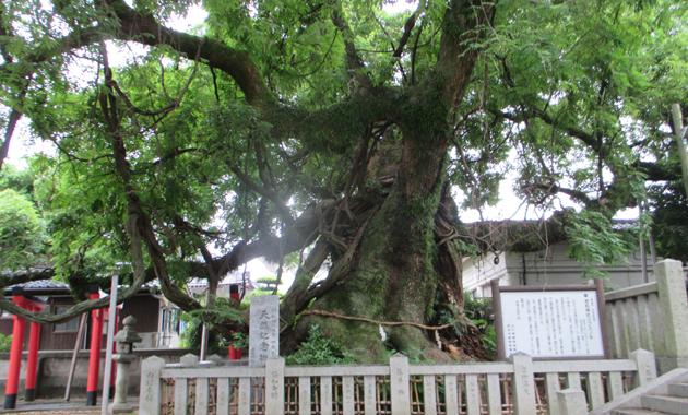 防府 老松神社